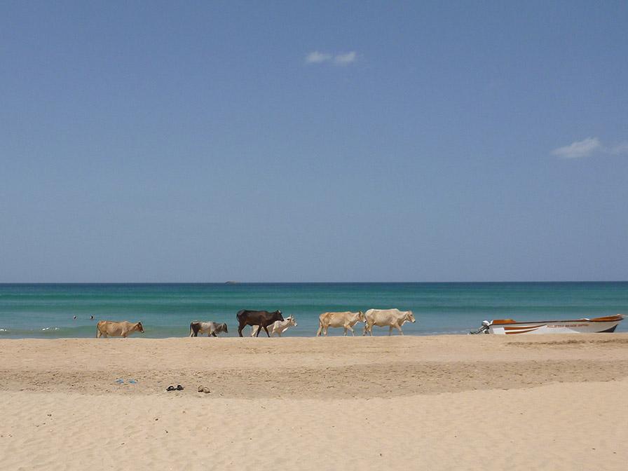 L'incroyable plage de Nilaveli
