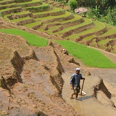Rice terraces in the Knuckles Mountain Range Sri Lanka