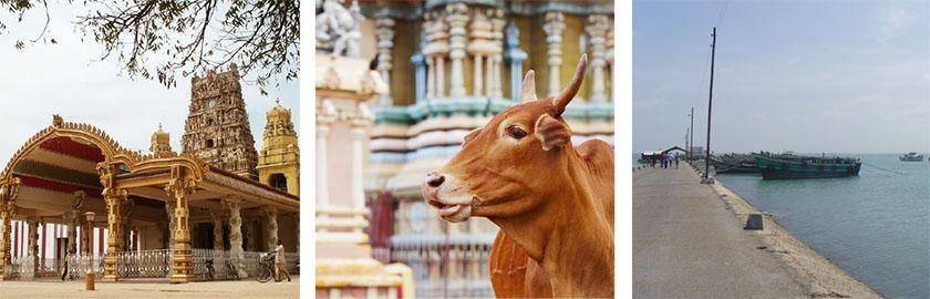 Temple Hindou de Jaffna avec une vache et le port de Nainativu.