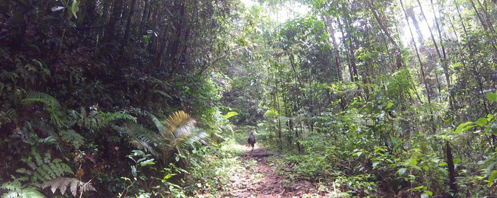 Ce qu'il faut savoir sur la forêt de Sinharaja !