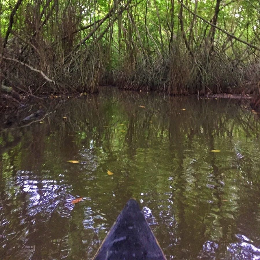 canoeing trip, mangroves, lagoon, unawatuna