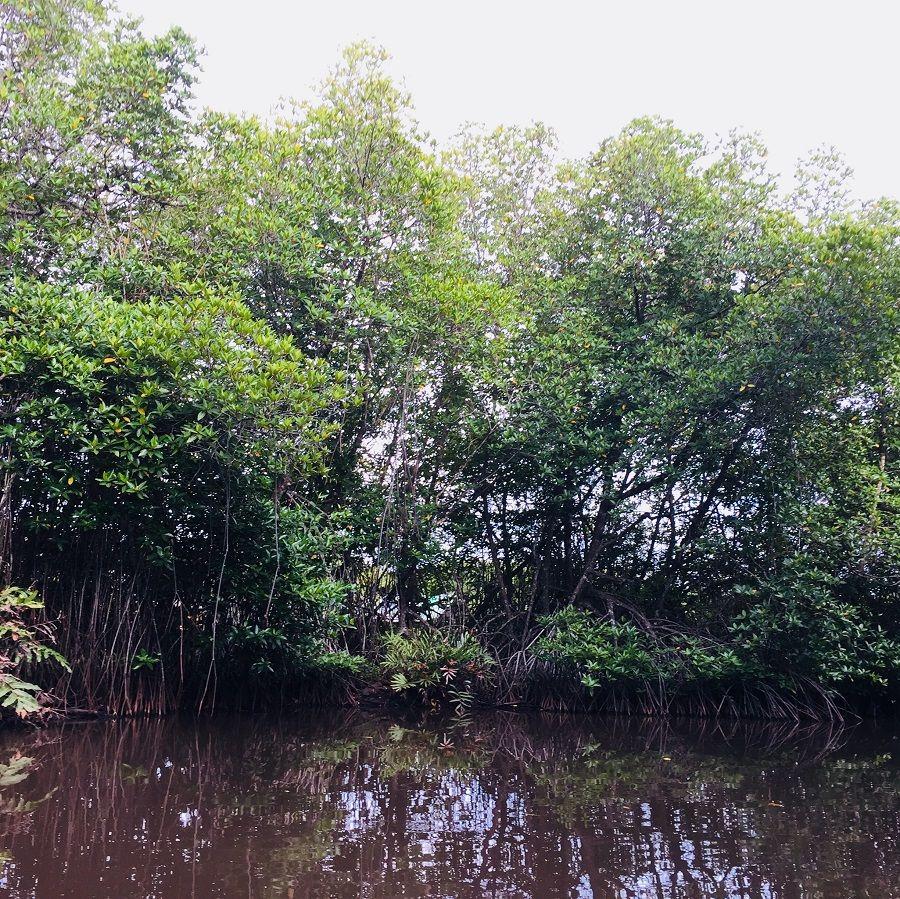 Canoé, Magroves, lagon, Sri Lanka