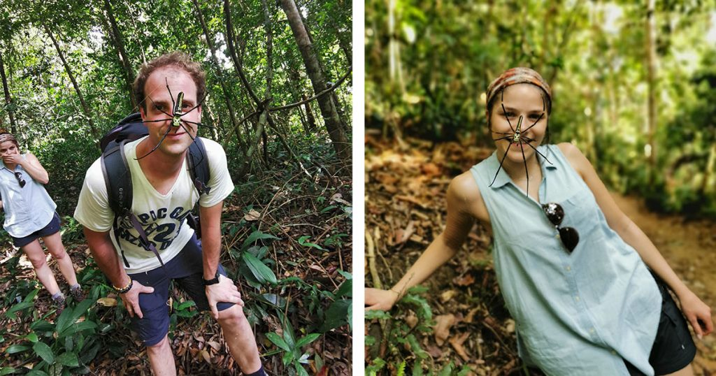 araignée forêt de Sinhajara au Sri Lanka