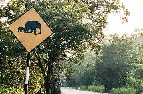 panneau route elephant sri lanka