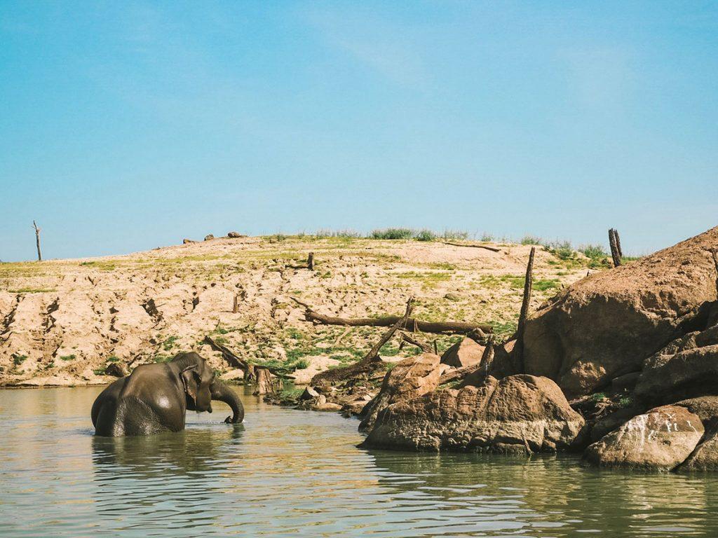 Elephant Gal Oya National Park